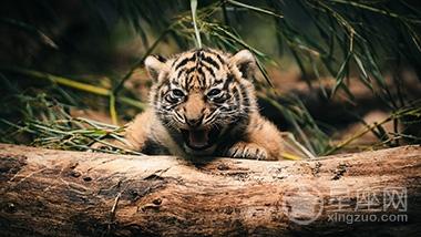 孕妇梦见小狗变成小老虎
