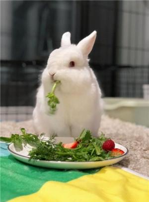 你是哪种动物系恋人?猫系还是兔系?