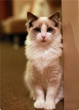 梦见家里跑进来三只猫,不一定会有好事情发生