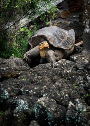 捡到乌龟有什么风水说法?有利于老人健康长寿