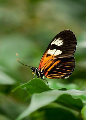 店里飞进蝴蝶是吉是凶?它们究竟有什么寓意?