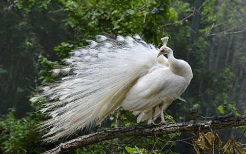 处女座代表的动物,颜值巨高的萌物!