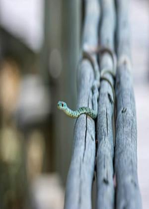 女人梦见杀蛇什么预兆?感受战胜的快乐