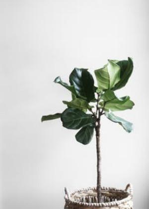 梦见栽树苗是什么意思?给自己去表现的勇气