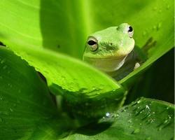 梦见青蛙跳到自己身上 针对不同人群寓意大全