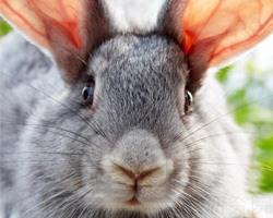 梦见兔子说话是什么意思 暗示哪方面将出现问题