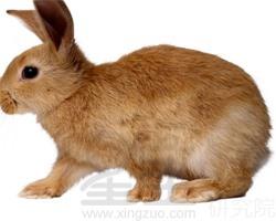 梦见吃兔子肉是什么意思 可能预示着夫妻要吵架