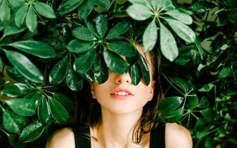 梦见树开花:理想可行,未来可期