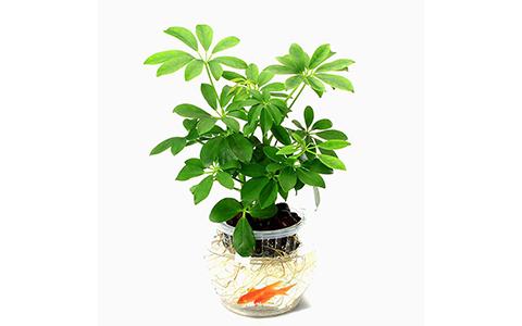 办公室放什么植物风水好?运势上涨必备好绿植!