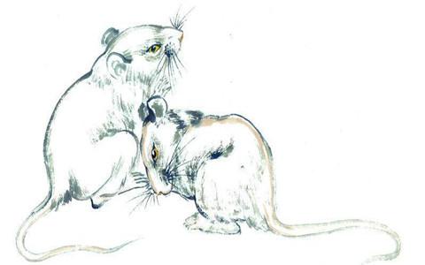 属鼠人的性格,这种性格一生都不会有衣食之忧