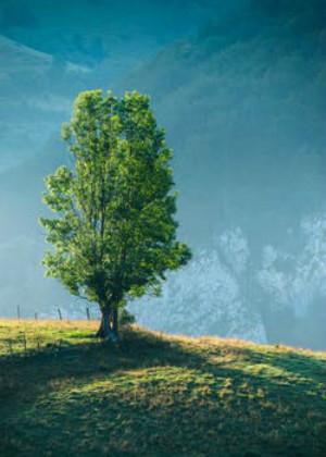 屋后種什么樹最旺風水?福氣要靠自己種