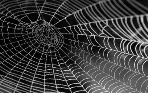 夢見蜘蛛爬到自己身上,對金錢的認同感加重