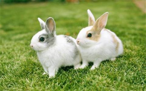 梦见兔子咬我意味着什么?你需要审视自己的内心
