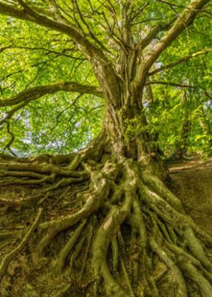 梦见树倒了,过度强势会给人带来压力