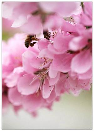 桃花劫是什么意思?一种不好的桃花运