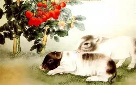 属猪的财运在哪个方向,属猪之人必须了解的知识!