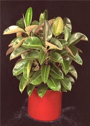 阳台种什么植物风水好?这十种植物率先选