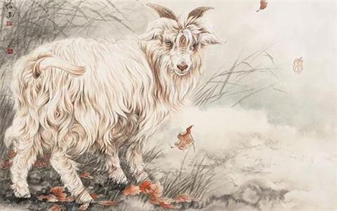 A型血属羊人,你了解吗?