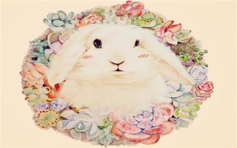 属兔和属兔的相配吗?两个人结婚也是不错的选择