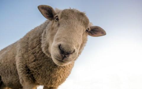 为什么正月初四称为羊日?有这么些习俗需要知道