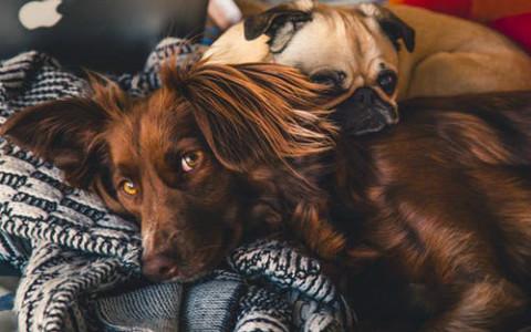 属狗人犯太岁的年份,谨慎对待犯太岁的影响