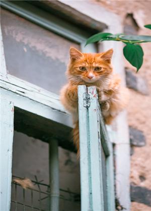 梦见猫的毛掉光了,发生好事的几率高