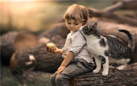 梦见猫得了白癜风,可能和皮肤病有关