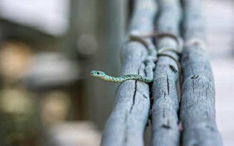 属蛇的人命苦吗?猜疑多变的性格需要改改