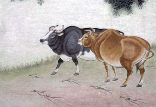 B型血屬牛人的性格優點和缺點- 星座網