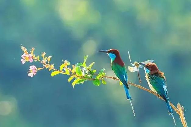 有關夏至的詩句,九首最美夏至古詩詞!